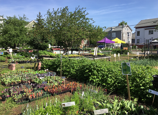 City Farm Plant Sale