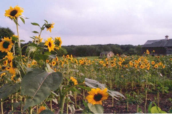 job listing, SCLT, hiring, Director of Farmland Access and Education, Providence, Rhode Island, urban agriculture