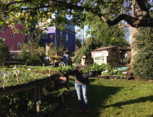 Plant Sale 2019, City Farm, SCLT, Providence