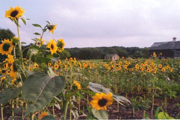 job listing, SCLT, hiring, Director of Farmland Access and Education, Providence, Rhode Island, urban agriculture