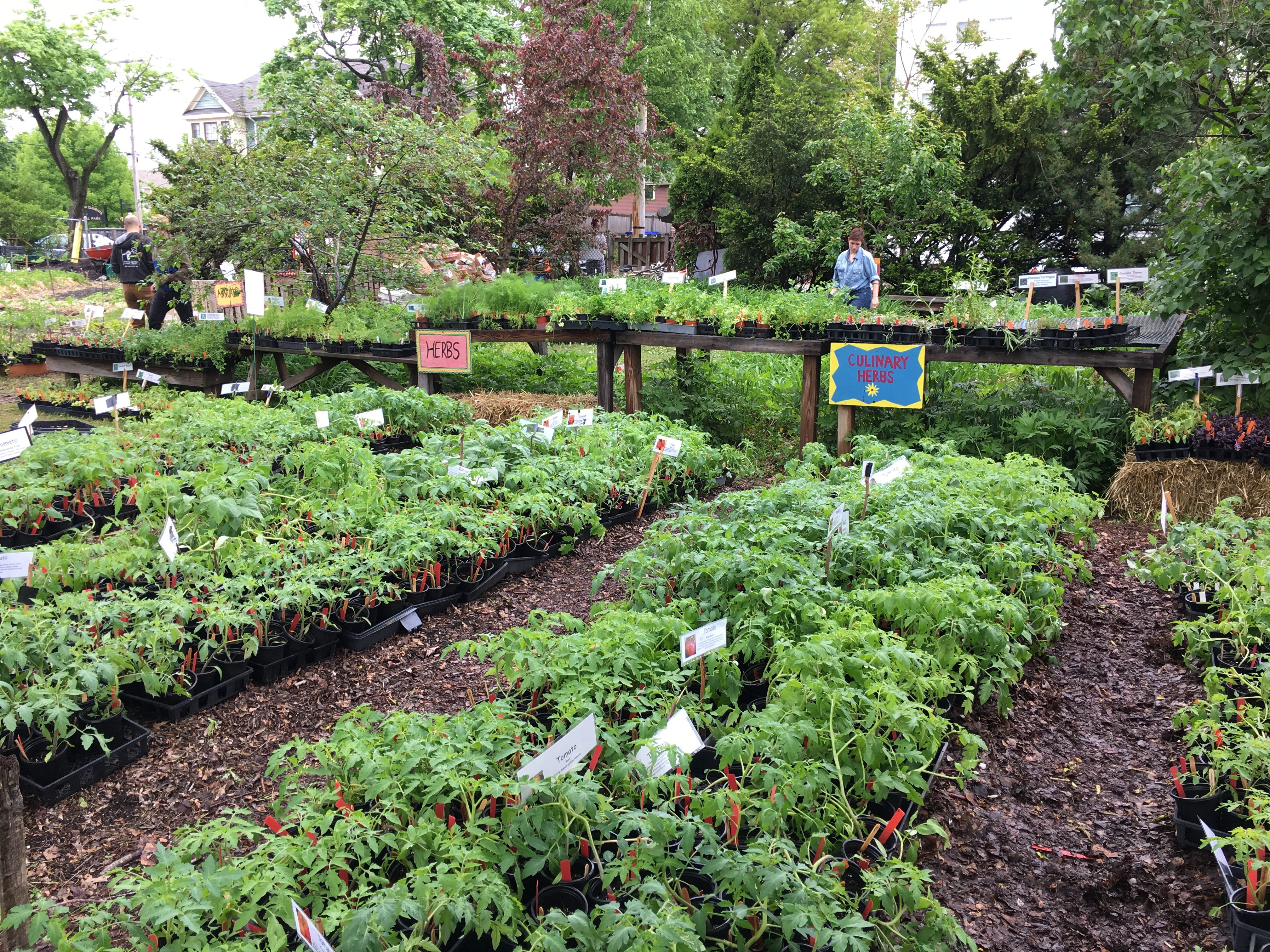 Plant Sale, City Farm, Providence