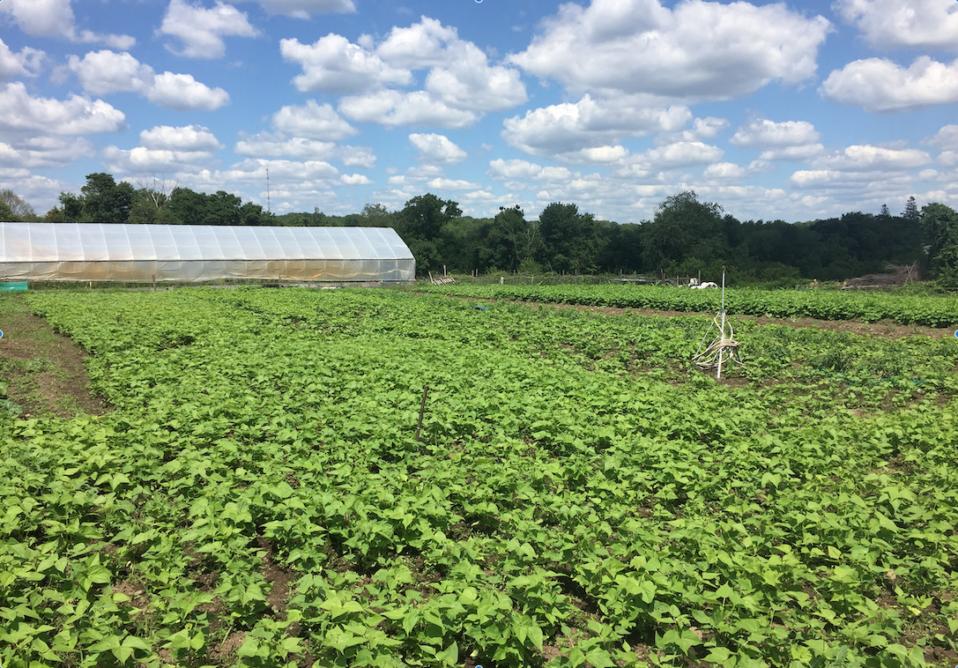 UEF, SCLT, Cranston farm